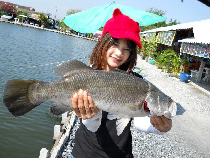 Barramundi Fishing Fighter by fishingEZ