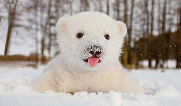 หมีขาว หรือ หมีขั้วโลก ตอนแรก