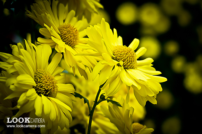 การถ่ายภาพ Macro ภาค ถ่ายภาพดอกไม้ ตอนที่ 1