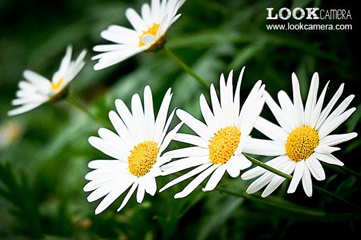 การถ่ายภาพ Macro ภาค ถ่ายภาพดอกไม้ ตอนที่ 2